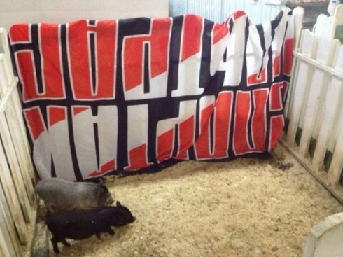 баннер спартак ультрас в свинарнике