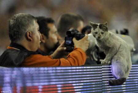 Кошка на футбольном поле
